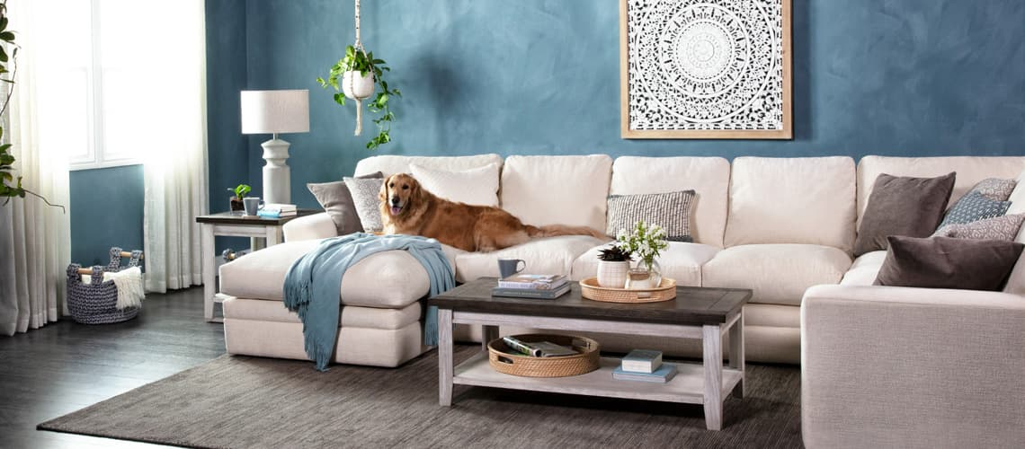 dog-friendly sofas