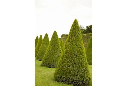 Picture-24X36 Garden Topiaries By Karyn Millet