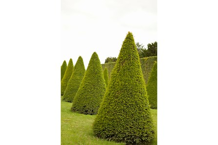 Picture-24X36 Garden Topiaries By Karyn Millet