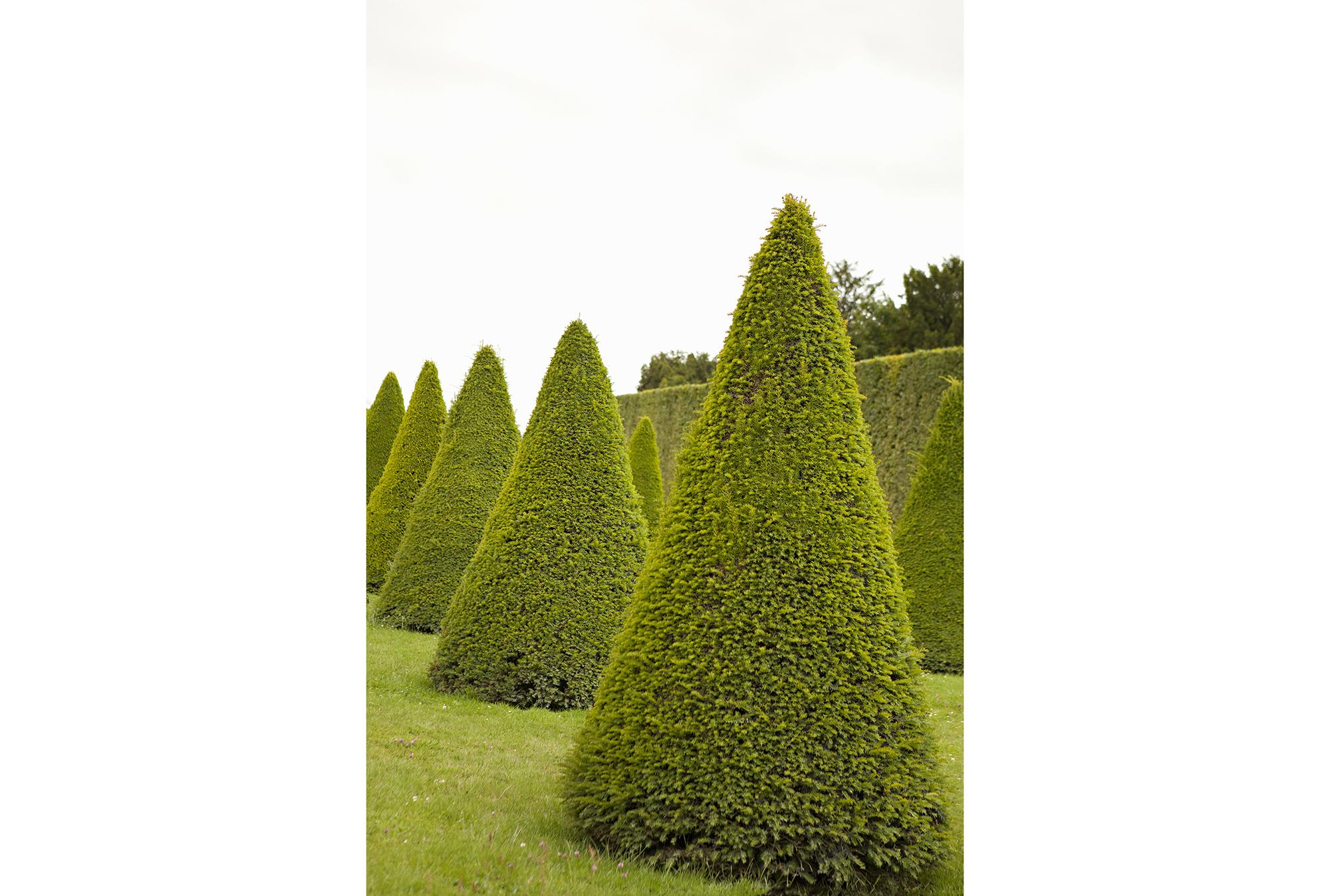 Picture 24X36 Garden Topiaries By Karyn Millet