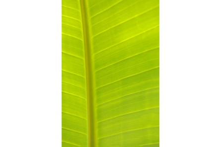 Picture-24X36 Tropical Leaf By Karyn Millet - Main