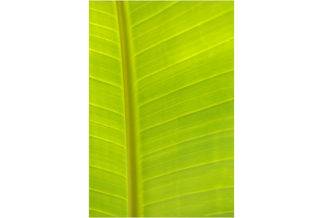 Picture-24X36 Tropical Leaf By Karyn Millet - 360