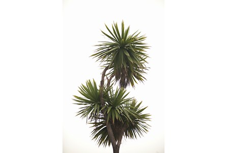 Picture-24X36 Pom Palms By Karyn Millet