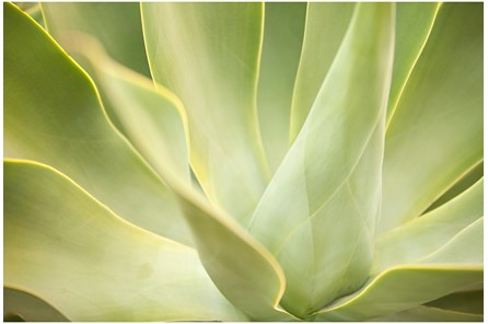 Picture-36X24 Agave By Karyn Millet - Main
