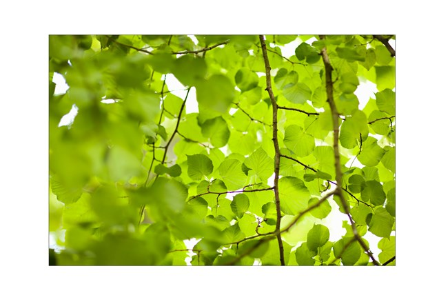 Picture-Green Canopy - 360
