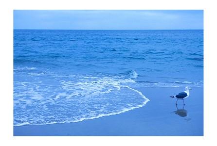 Picture-Blue Shorebird By Karyn Millet