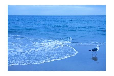 Picture-Blue Shorebird By Karyn Millet - Main