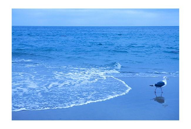 Picture-Blue Shorebird By Karyn Millet - 360