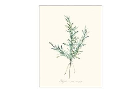 Picture-Herb Garden II