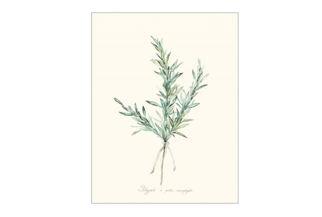 Picture-Herb Garden II - 360