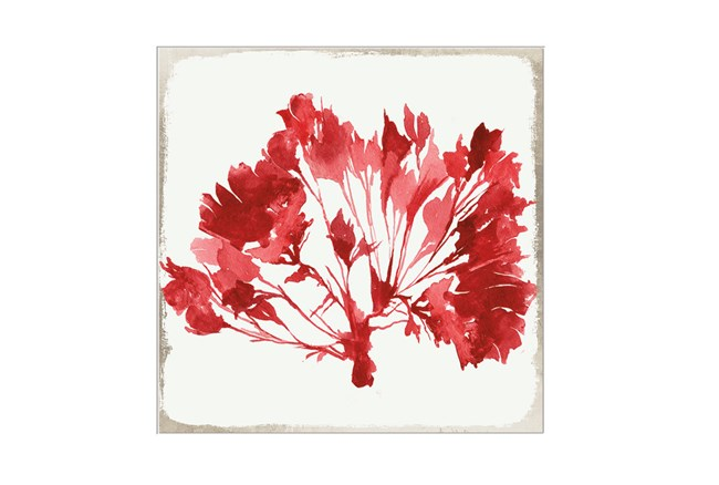 Picture-Red Coral - 360