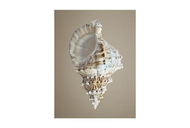 Picture-Champagne Shell III - 360