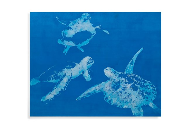 Picture-Indigo Sea Turtles - 360