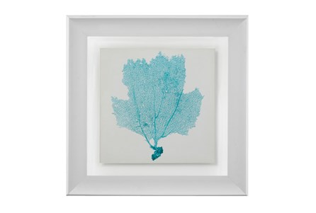 Picture-Sea Fan Aqua