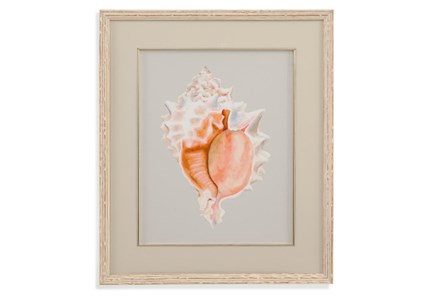 Picture-Framed Shell I