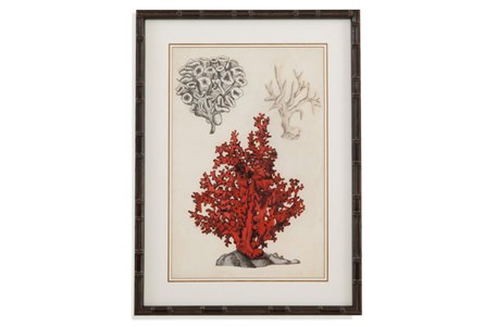 Picture-Coral Study I