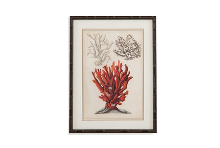 Picture-Coral Study II