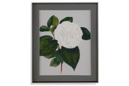 Picture-White Magnolia Ii - Main