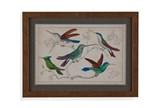 Picture-Hummingbird Group I - Signature