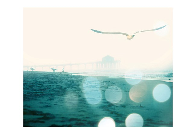 Picture-Seagull - 360