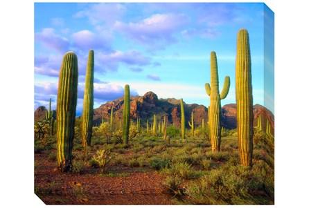 Picture-24X20 Cactus Sky