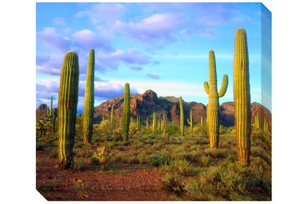 Picture-24X20 Cactus Sky - Main