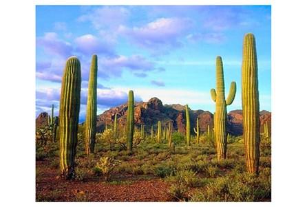 Picture-50X40 Cactus Sky