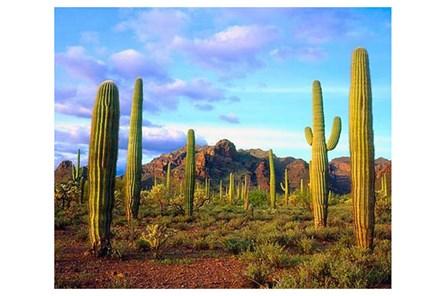 Picture-50X40 Cactus Sky - Main