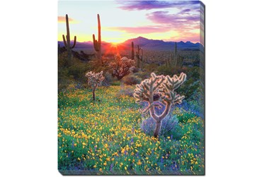 Picture-20X24 Desert Wildflowers