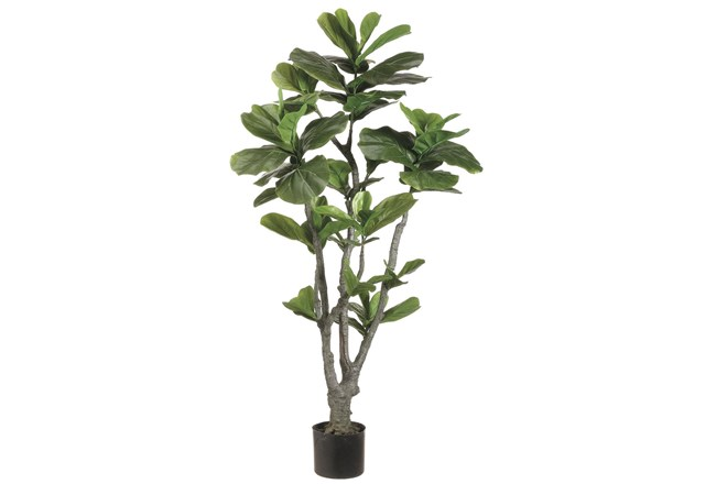 Plant-4 Foot Fiddle Fig Tree - 360