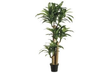 Plant-5 Foot Dracaena Tree