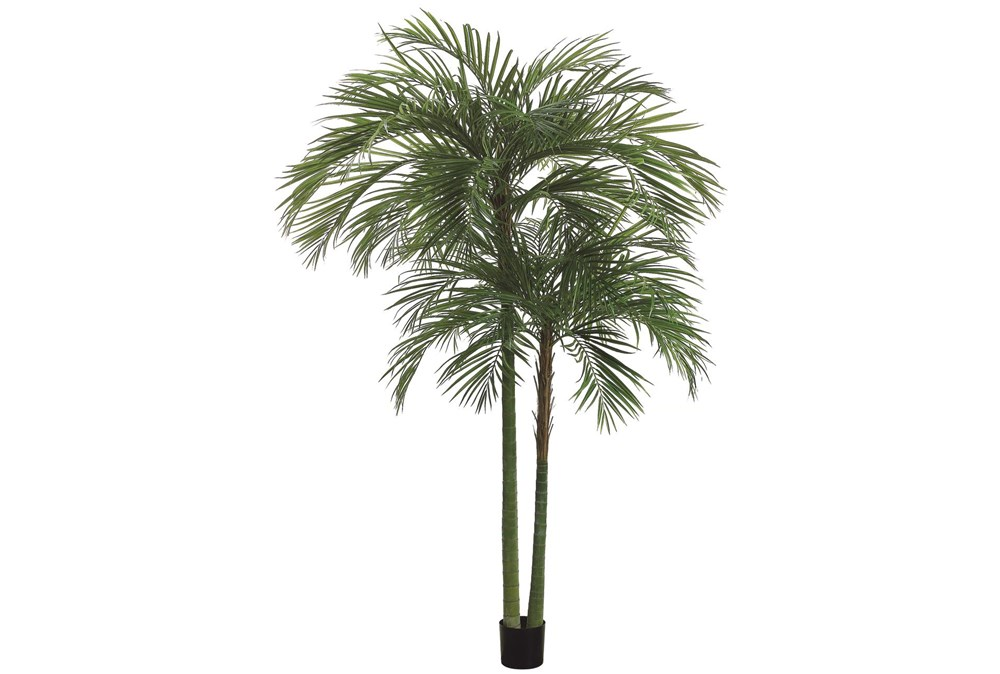 Plant-7 Foot Areca Palm Tree
