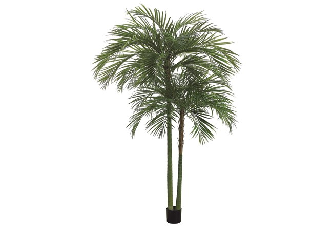 Plant-7 Foot Areca Palm Tree - 360