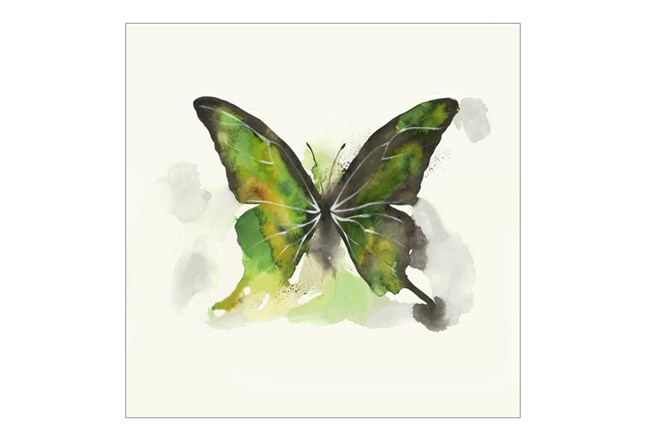 Picture-24X24 Butterfly Dance I - 360