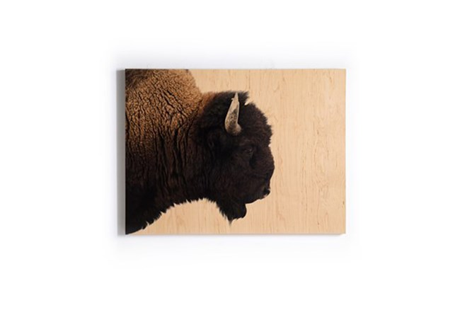 Picture-Lone Bison Printed On Wood Box 40X30 - 360