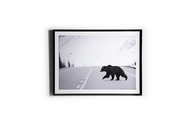 Picture-Grizzly With Black Maple Frame 40X30 - 360