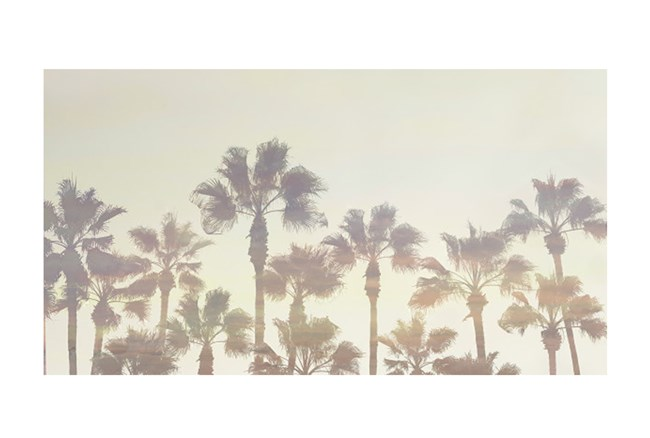 Picture-44X24 Filtered Palms - 360