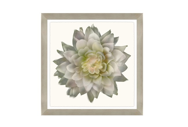Picture-24X24 Ghost Flower - 360