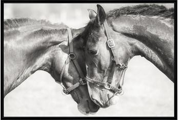 56X36 Two Horses