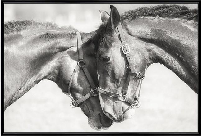56X36 Two Horses - 360