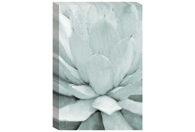 Picture-Agave Embellished Canvas 24X36 - 360