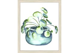 Picture-Lucky Plant I