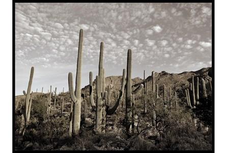 50X38 Cactus Summit I - Main
