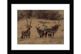 Picture-Gazelle Gathering