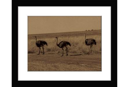 Picture-Ostriche Lane