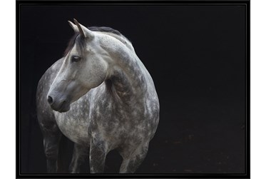 Picture-Midnight Rider 42X32