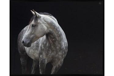 52X42 Midnight Rider