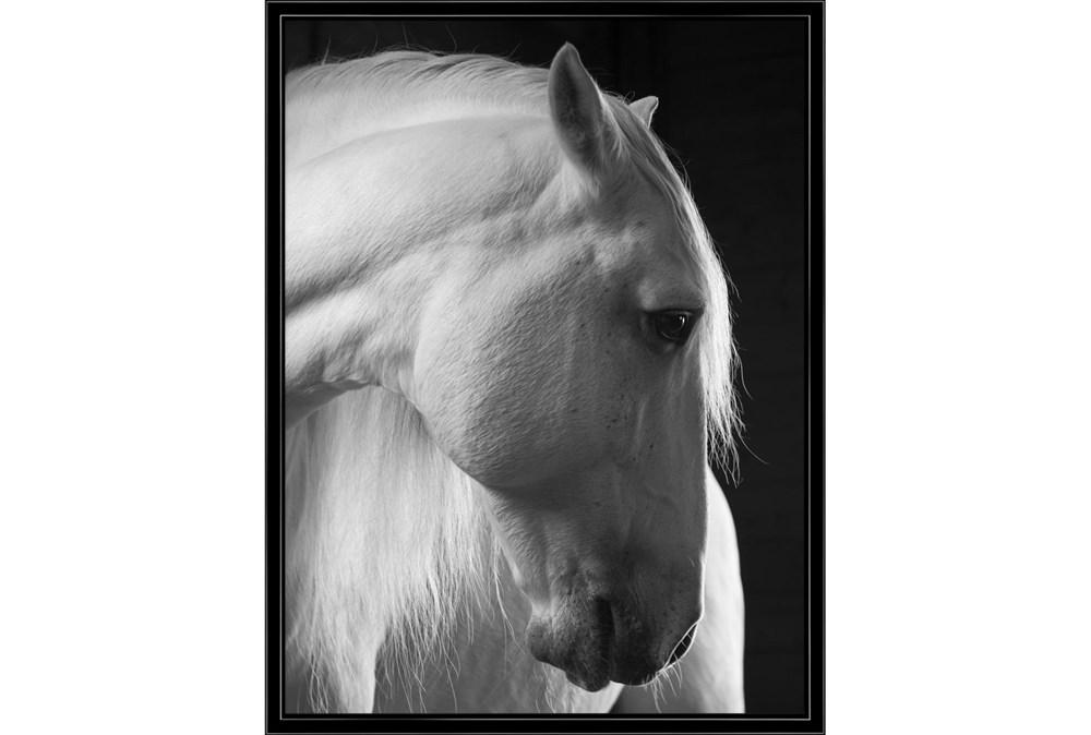 32X42 Timid White Stallion