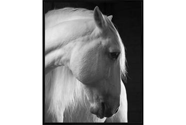42X52 Timid White Stallion