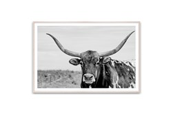 Picture-Texas Longhorn 60X40